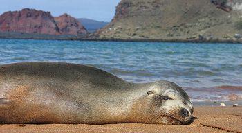 Seal on beach in Galapagos