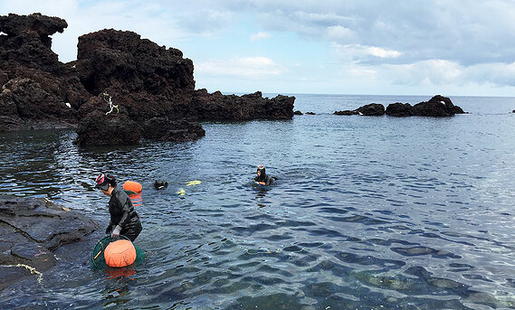 Haenyeo sea women emerge from a dive.