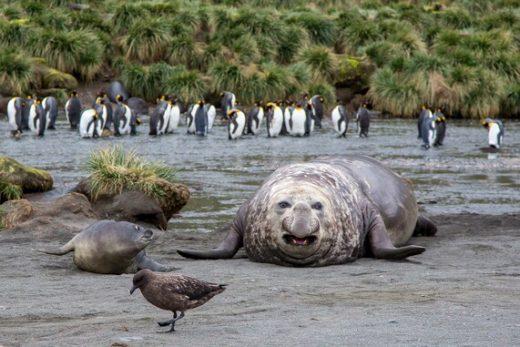 Experience many wildlife encounters