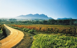 Drive to Stellenbosch today