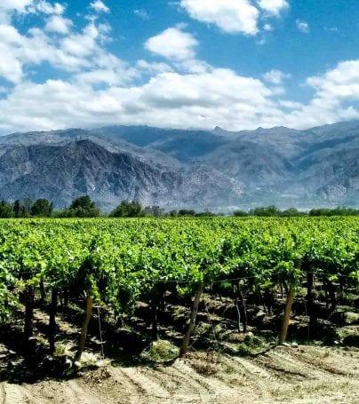 Vineyard in Cafayate, Argentina