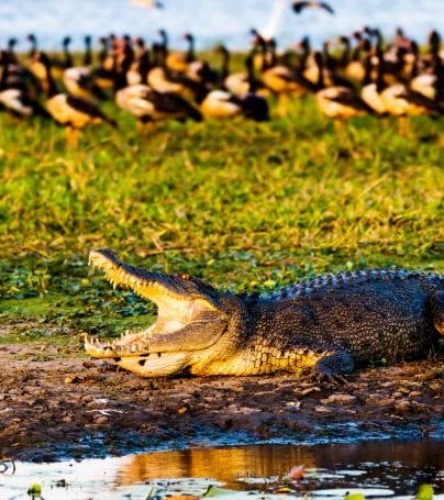 Wildlife at Kakadu National Park, Australia