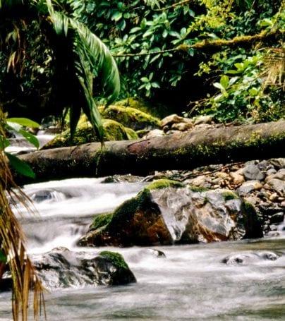 River in La Amistad National Park, Costa Rica