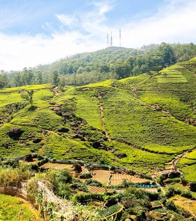 Hills of Nuwara Eliya, Sri Lanka