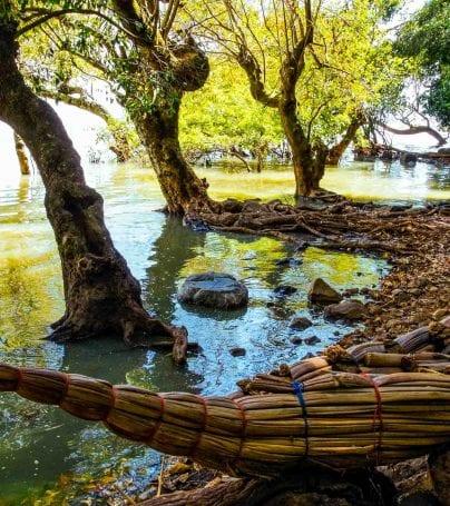 Papyrus boats on shore of Lake Tana, Ethiopia
