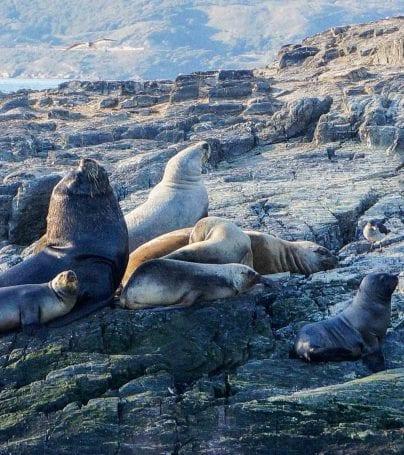 Seals on rocks near Ushaia, Argentina