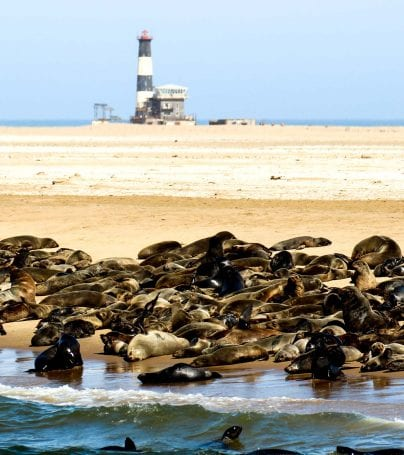 Seals on the beach near Walvis Bay, Namibia