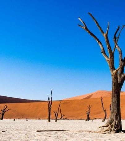 Desert trees in Deadvlei, Namibia