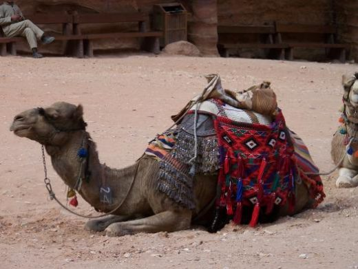 Choose a camel ride into the ruins