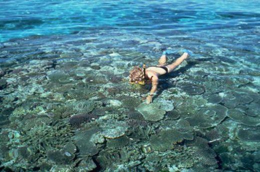 Snorkeling is a popular activity in Freycinet