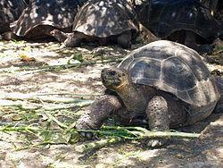 Visit tortoises at Charles Darwin Research Station