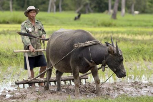 Farming in rural Northern Thailand