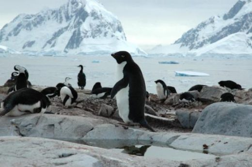 Visit colonies of penguins