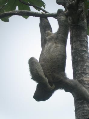 Mammals of Corcovado