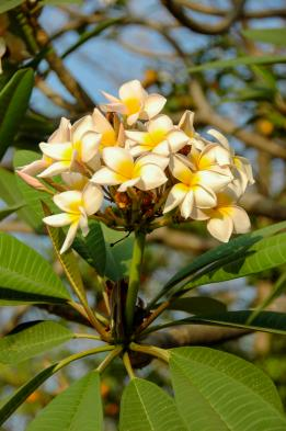 Visit Aburi botanical gardens