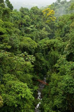Enjoy hiking through the dense forest