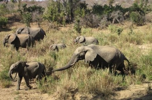 Welcome to Addo Elephant National Park