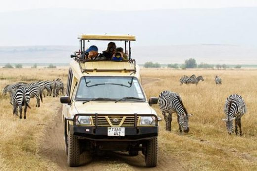 Get up close to wildlife on your game drive