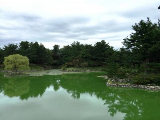 The beautiful Anapji Pond
