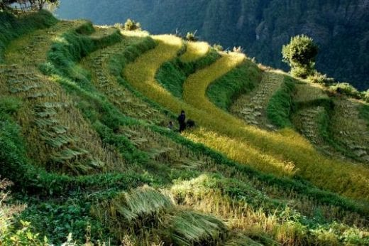 Admire the curves of terraced crops