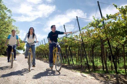 Take a gentle half-day bike tour today
