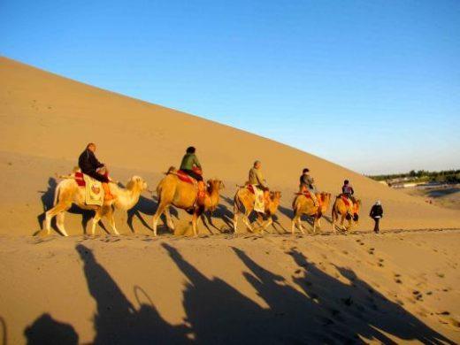 Enjoy a camel ride through the desert