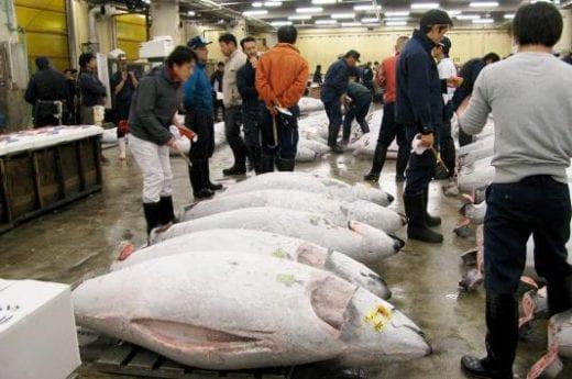 Explore the fish market