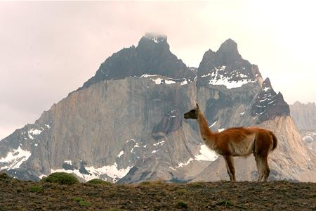 Spot snow-spattered peaks and guanaco during your drive across Patagonia