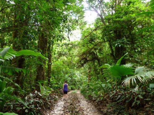 Hike through the dense