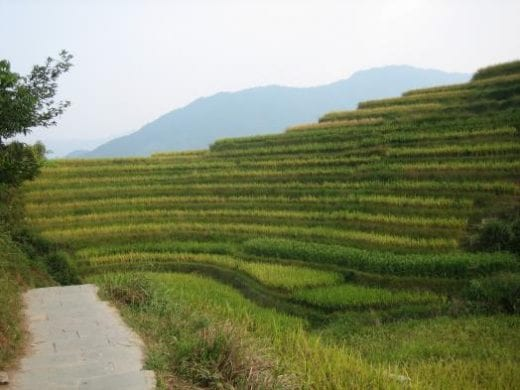 Beautiful terraced rice fields are common in China