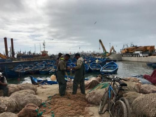 See the fishermen at Essaouira's port