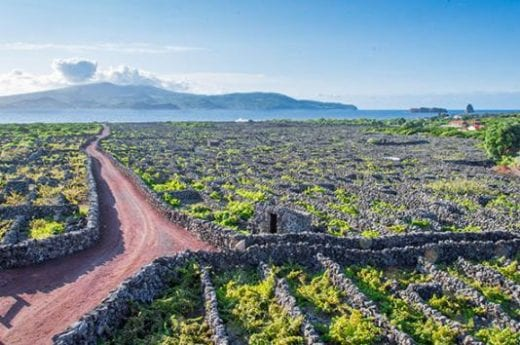 See the island's vineyards
