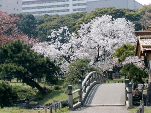 """Take a leisurely stroll through one of Tokyo's """"Central Parks"""""""