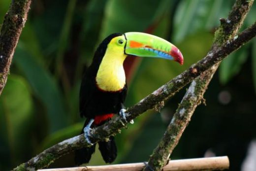 The birds of Costa Rica are calling