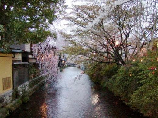 Kyoto is especially pretty during the Cherry Blossoms
