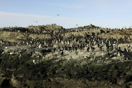 Walk with the penguins