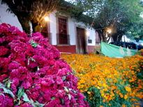 Patzcuaro flower market