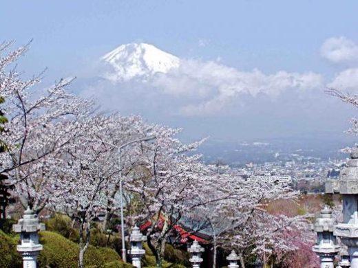 Mt. Fuji during Cherry Blossom season