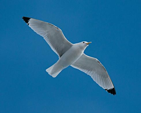 Watch for birds as you cross the Arctic Ocean