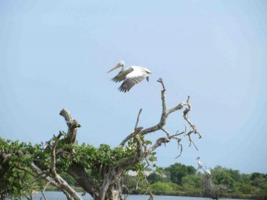 Storks are a sight at Bandhavgarh