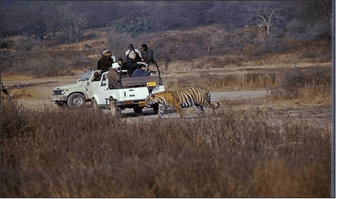 Travel in open-top jeeps and get close to wildlife
