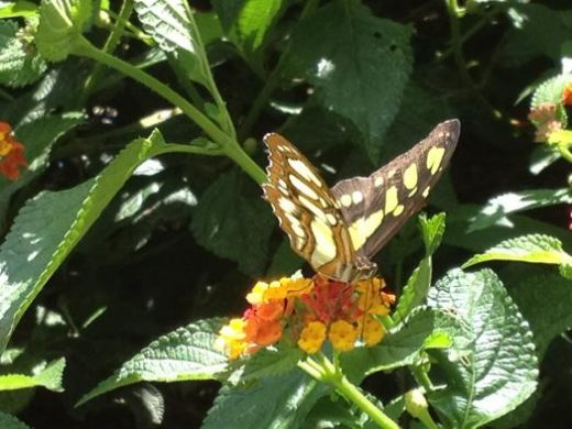 How many species of butterfly can you spot?