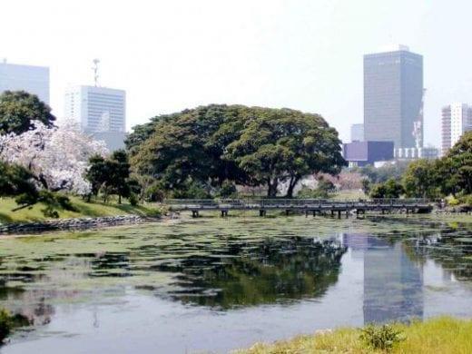Shinjuku Gyoen Park is a nice place to take a stroll