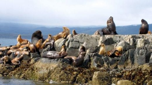 Wildlife abounds in Ushuaia