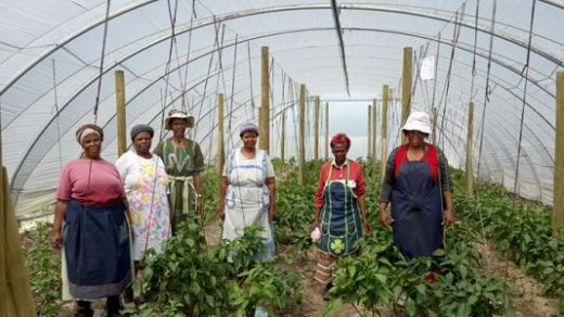 Meet people involved in Uthando projects