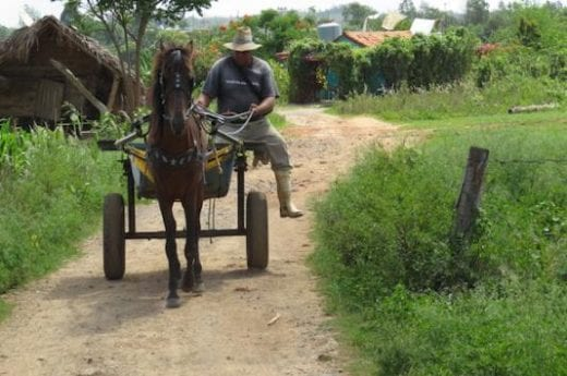 Horse-drawn or ox-drawn carts are still in use on the local farms.