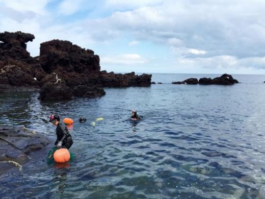 You may be able to see the Haeneo (women divers) today