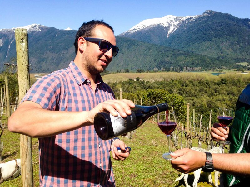 Man pours wine in Chile field