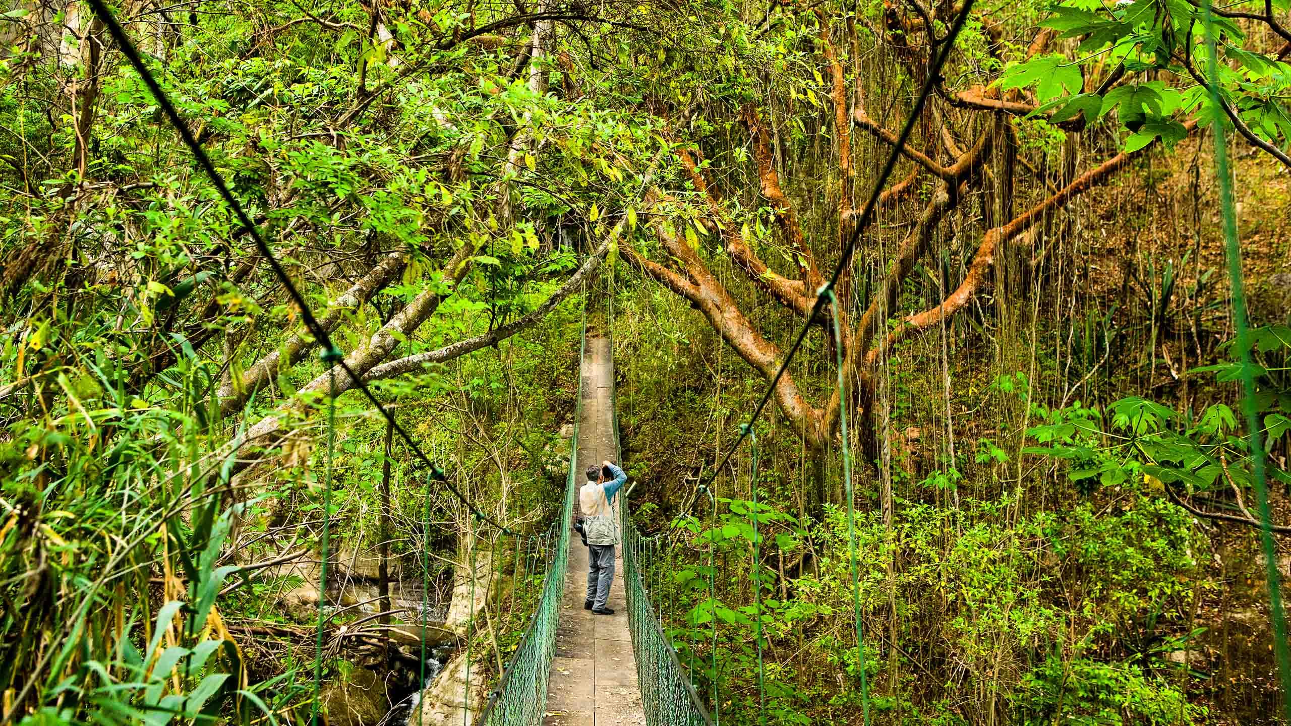 Man stands on bridge in Guatemala rainforest