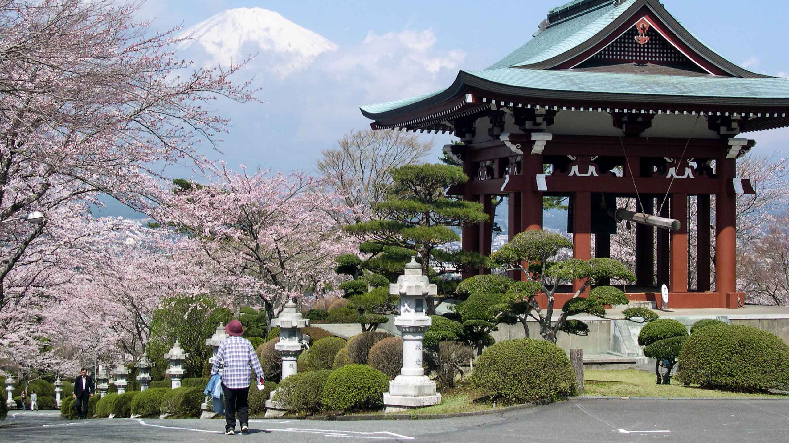 Japanese temple and cherry blossoms